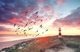 Vögel auf Sylt