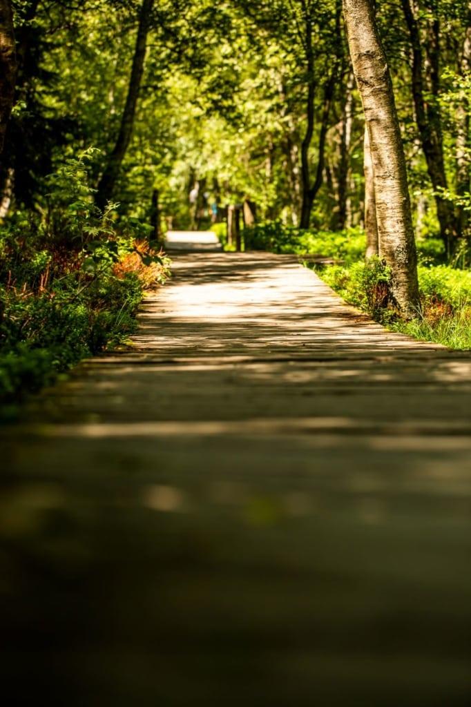 Fußgängerweg im Roten Moor in der Rhön