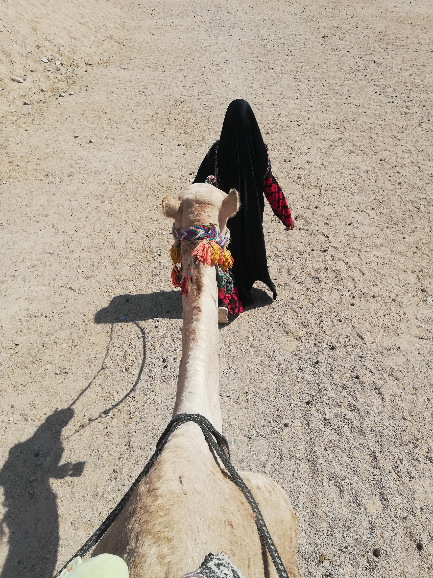 Frau wandert mit Kamel durch ägyptische Wüste