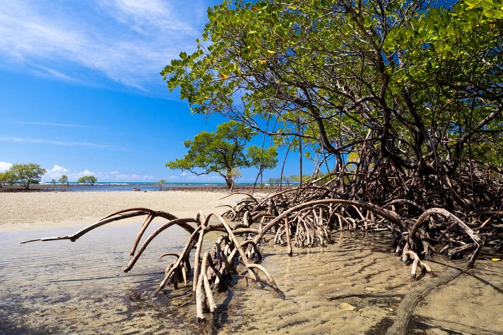 Mangrovenwald und blauer Himmel