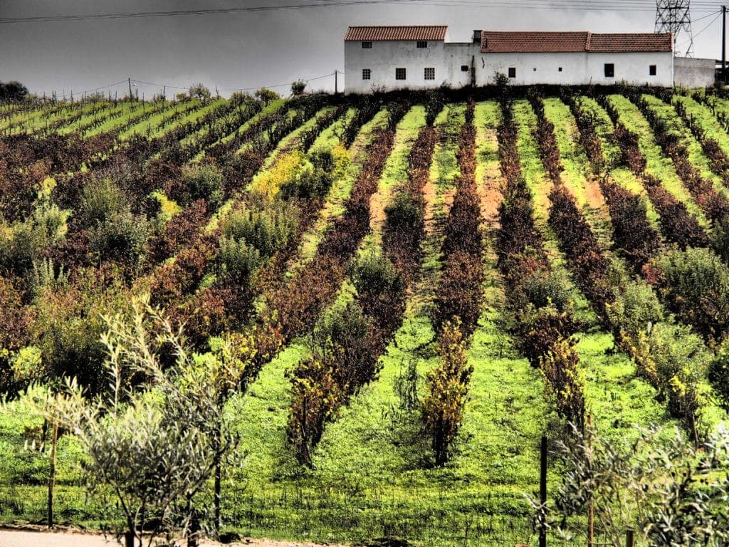 Unterwegs in den Weinbergen rund um Lissabon