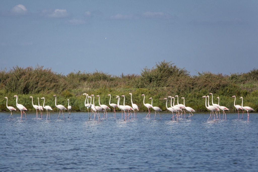 Flamingos in der Nähe von Lissabon