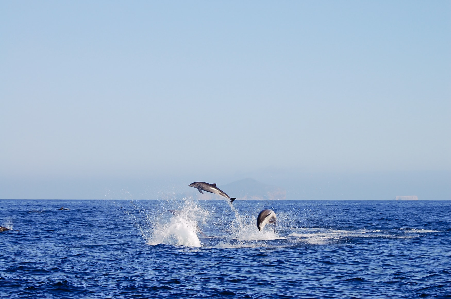 Delfine beim tauchen auf den Galapagos-Inseln in Ecuador
