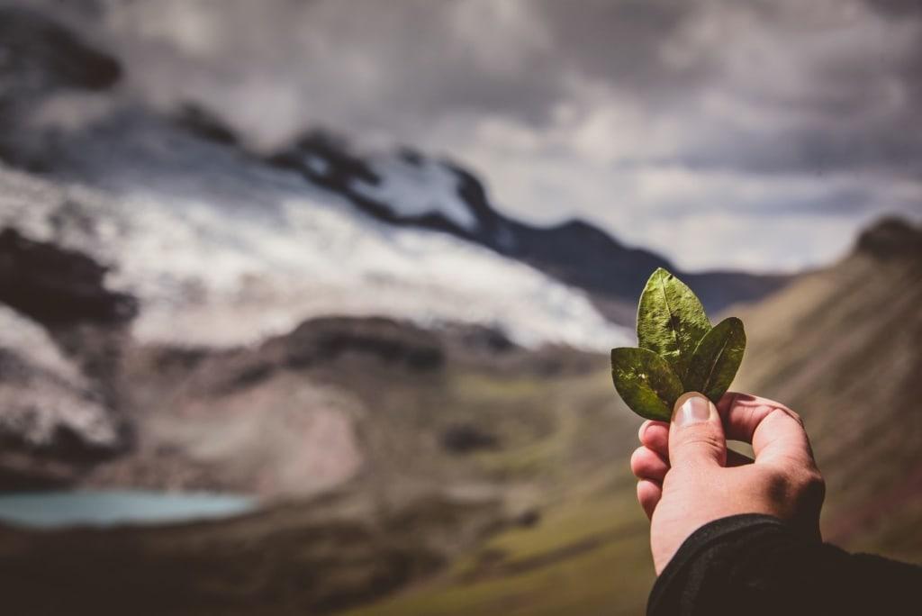 Person hält Blatt einer Coca-Pflanze auf dem Lares Trek in Peru vor die Kamera