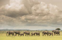 Die Singita Lodges in Tansania liegen im Herzen der Serengti.
