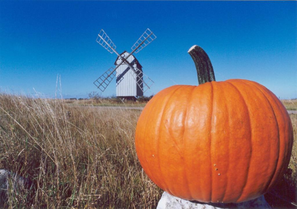 Kürbis in der Landschaft, im Hintergrund eine Windmühle