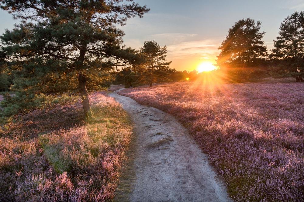 Lüneburger Heide bei Sonnenuntergang
