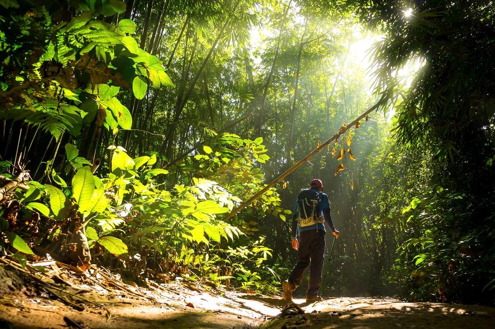 Mann im Wald wandernd