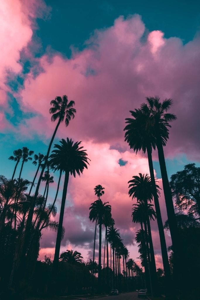 Palmen säumen eine Straße in Los Angeles vor einem pinken Himmel