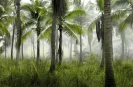Palmen im Dschungel