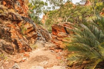 Outback von Australien mit roten Felsen und Palmen