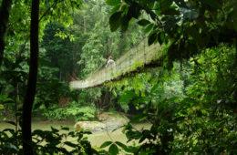 Danum Valley an der Ostküste Malaysias
