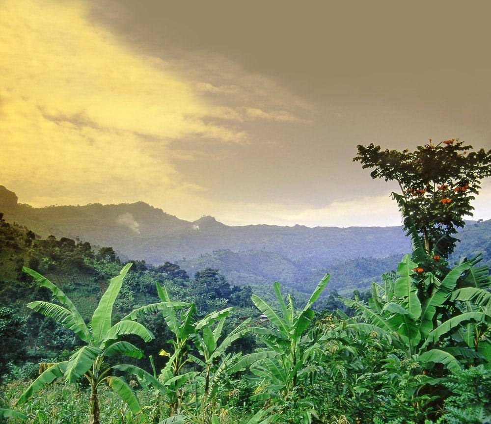 Mount Elgon Nationalpark in Uganda