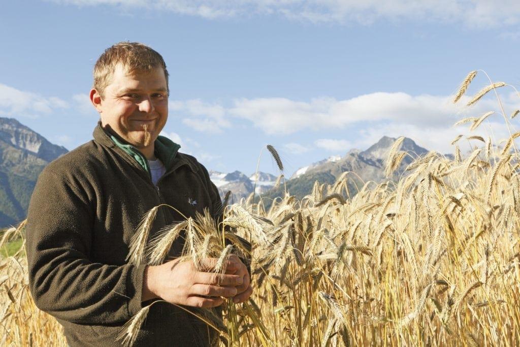 Südtiroler Brot: Landwirt Christian Telser kurz vor dem Mähen des Kornfeldes
