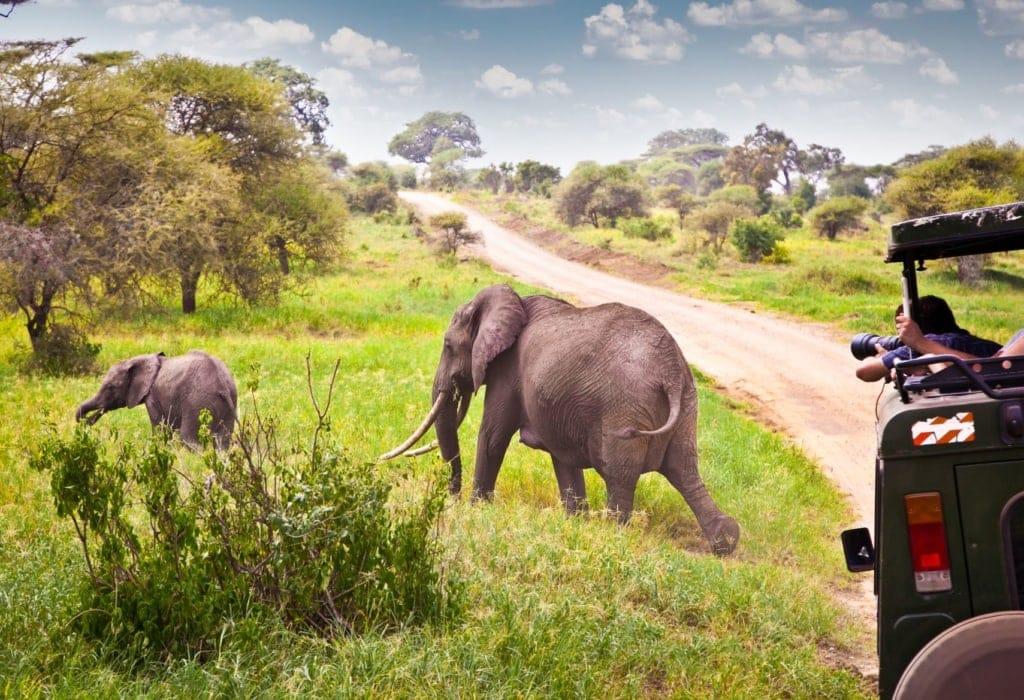 Elefantenfamilie in Kenia