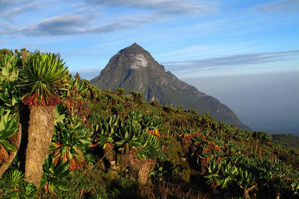 Volcano Nationalpark in Ruanda