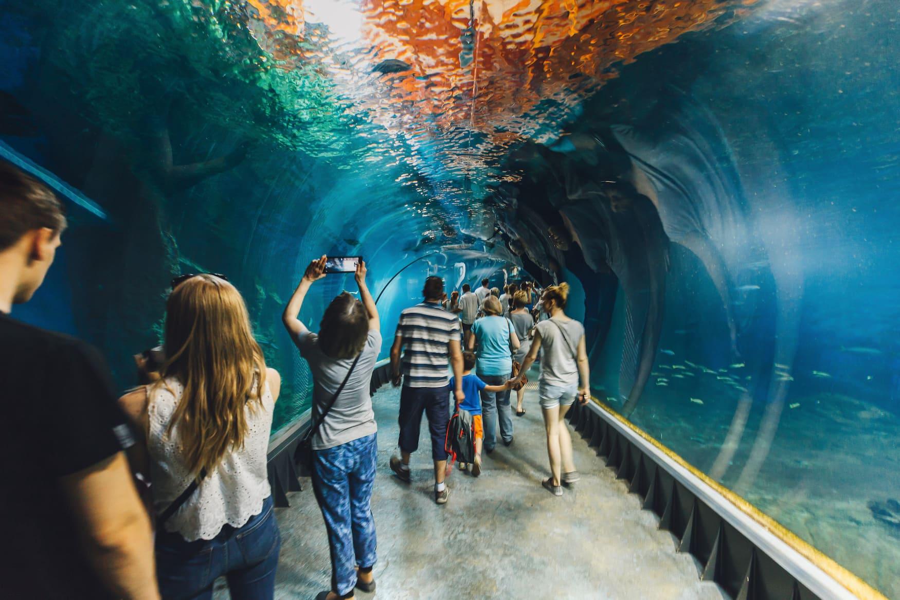Zoobesucher in modernem Tunnel in Aquarium