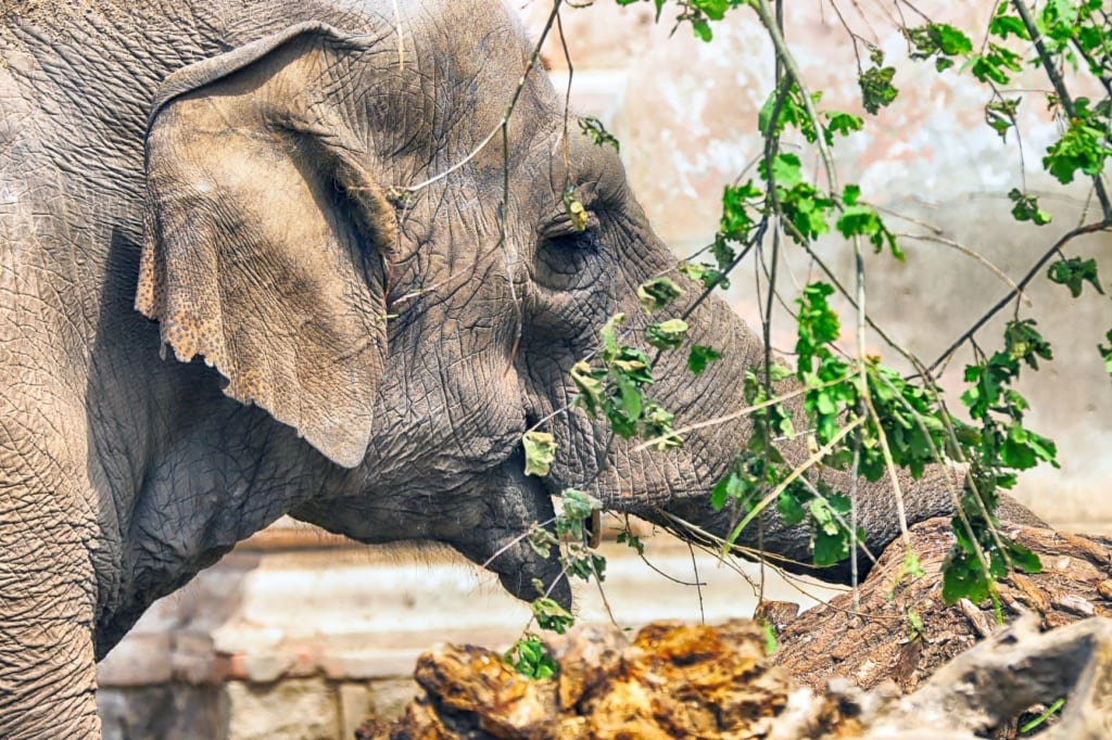 Elefant im Breslauer Zoo