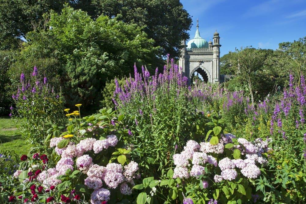Schöne Pflanzen in Brighton