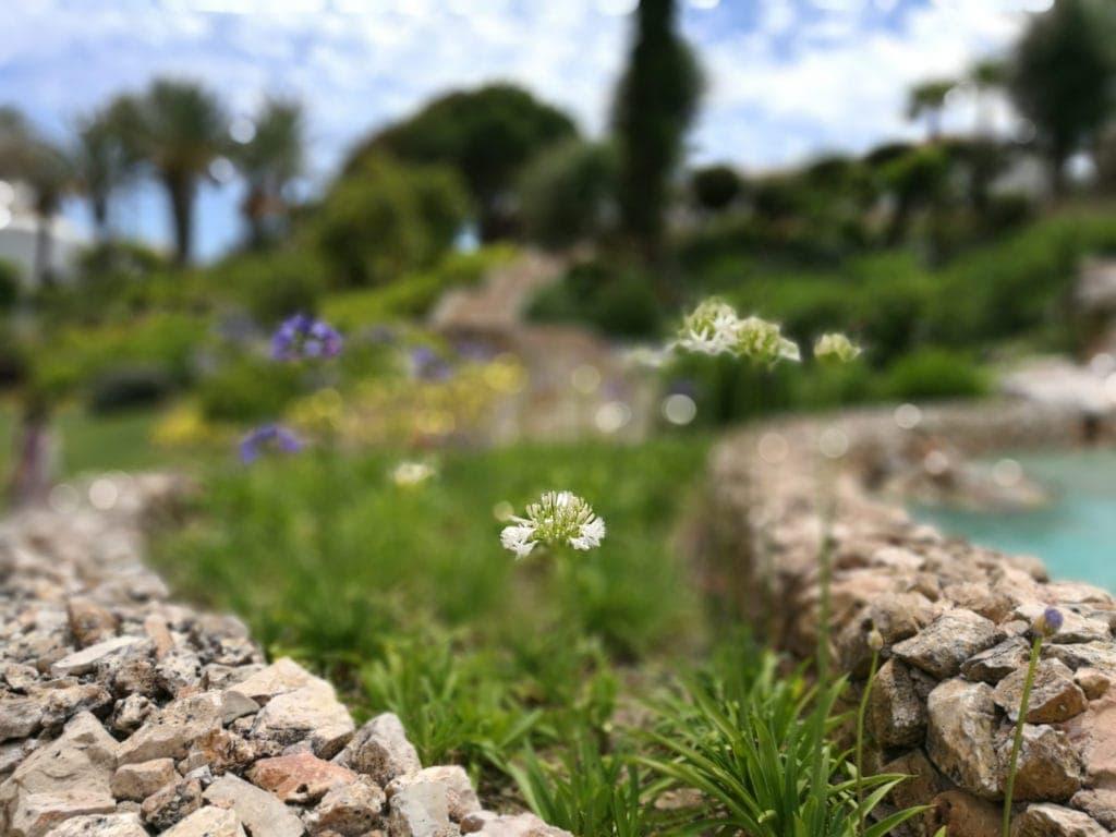 Grün, grüner, Algarve: Urlauben im Vila Vita Parc