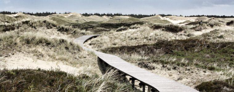 Beeindruckende Dünenlandschaft auf Amrum