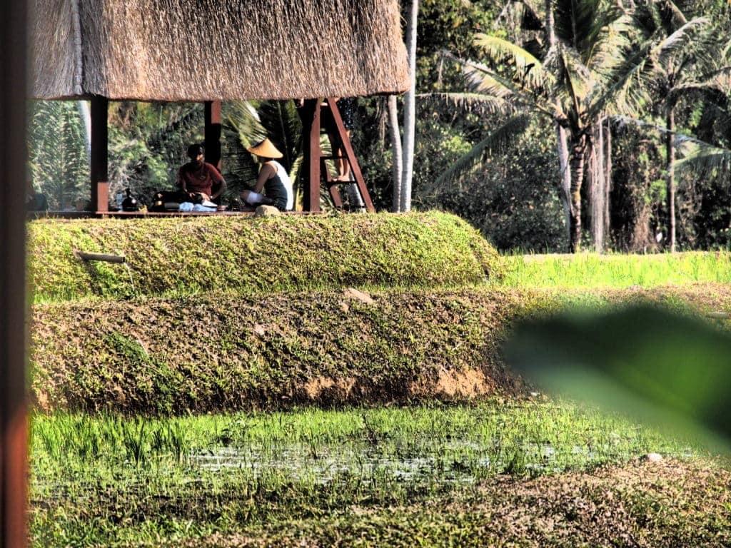 Piknik im Grünen: Inmitten des reisfeldes können Gäste köstliches genießen. Mandapa, Bali