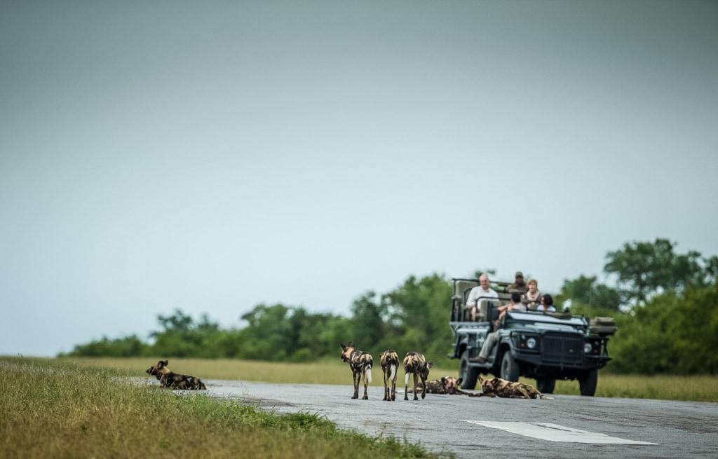 Auf Safari - Aufeinandertreffen mit einem Rudel Hyänen