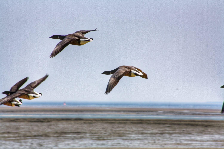 Vögel fliegen über die Nordsee