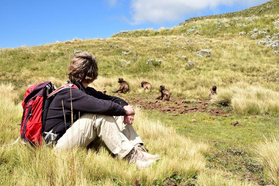 Paviane Äthiopien Wanderer