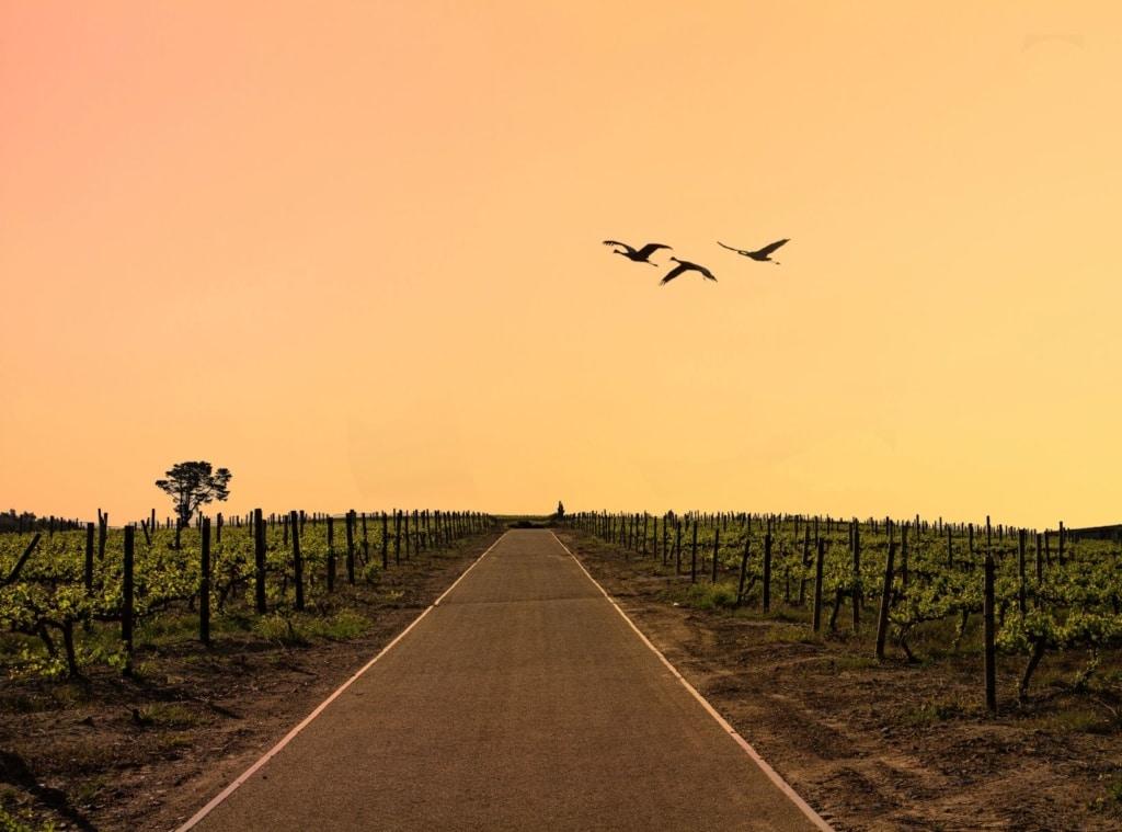 Straße in Stellenbosch, Südafrika