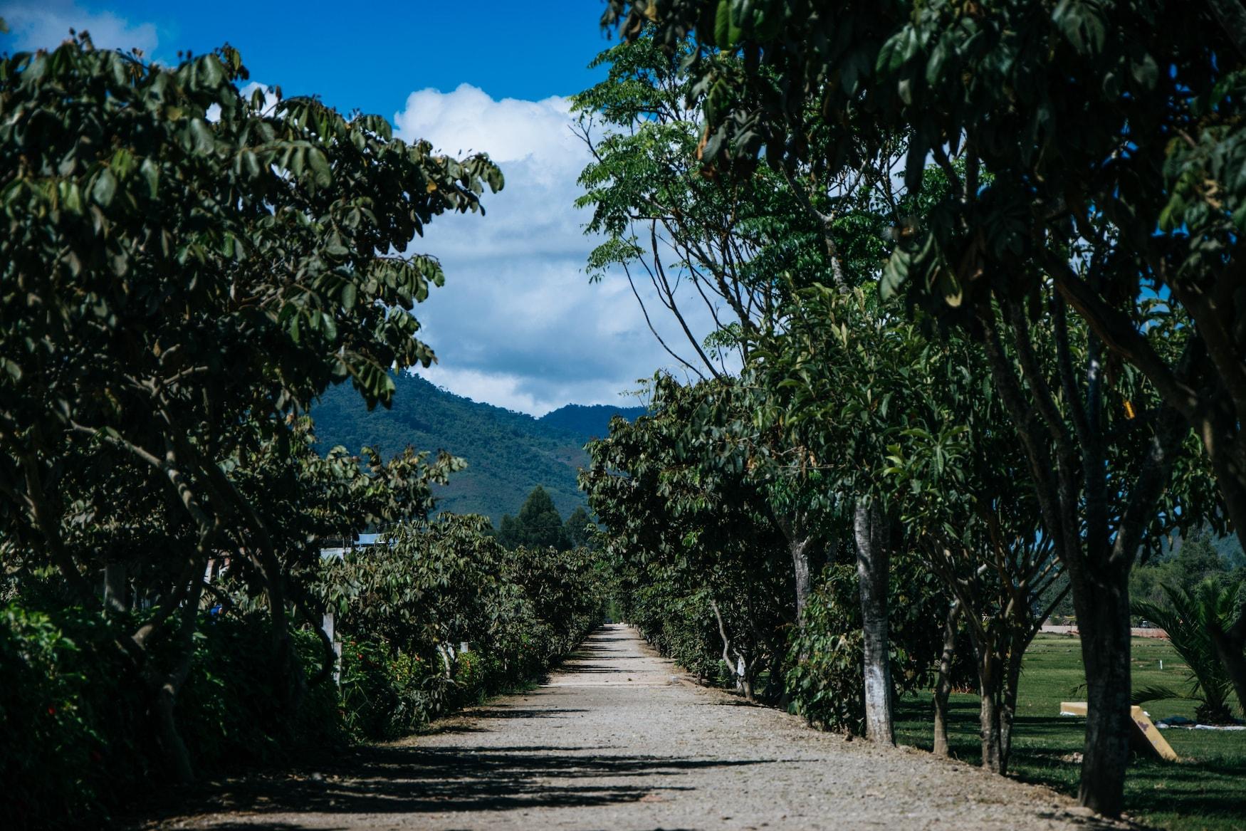 Urlaub mit dem Fahrrad im Amazonas in Peru
