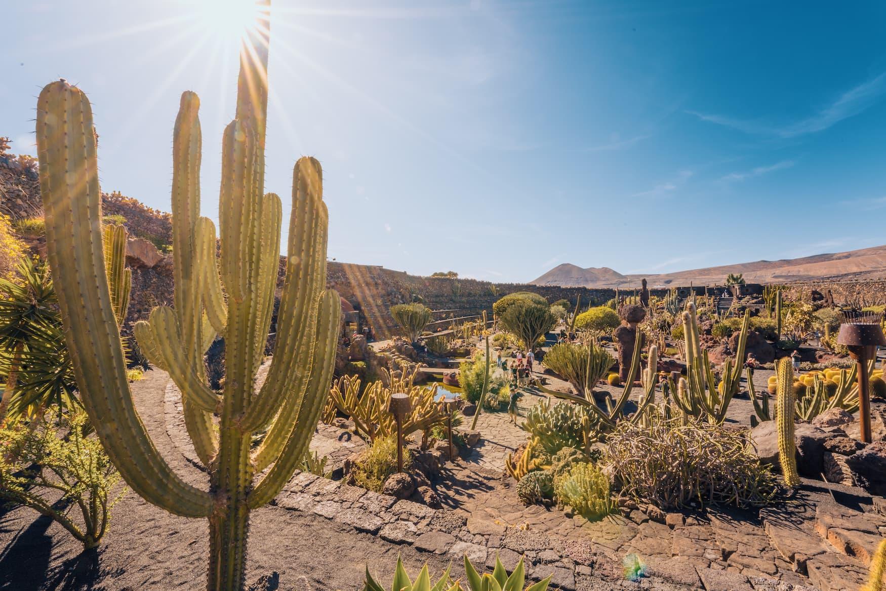 Jardín de Cactus auf Lanzarote des Künstlers Cesar Manrique