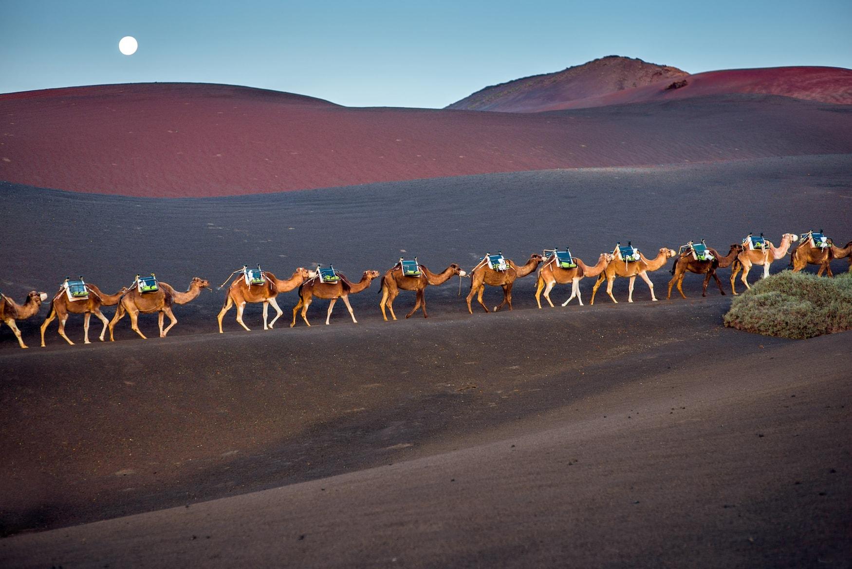 Kamelkaravane durch den Nationalpark Timanfaya