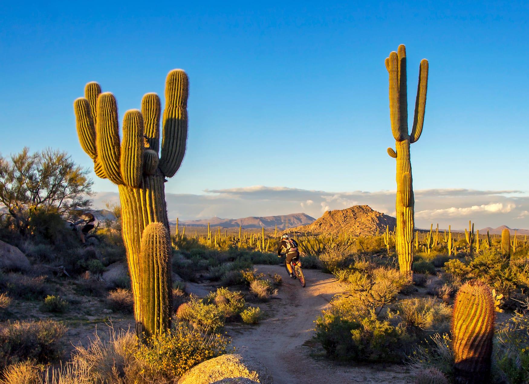 Radweg in Scottsdale, USA, vorbei an Kakteen und trockenen Landschaften