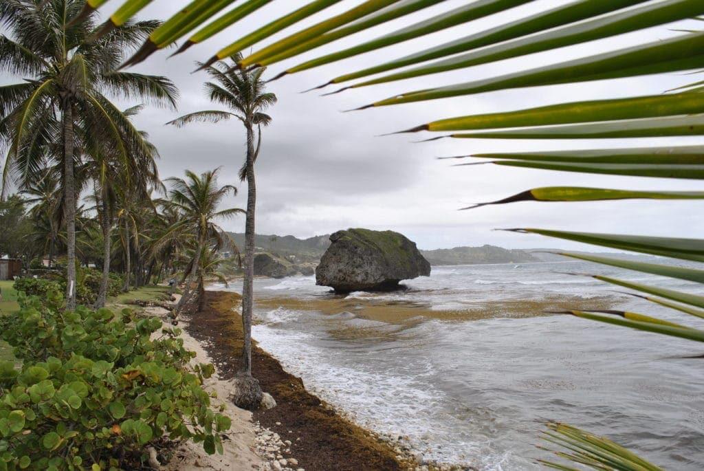In Bathsheba rollen die Wellen an die Felsen, ein Paradies für Surfer.