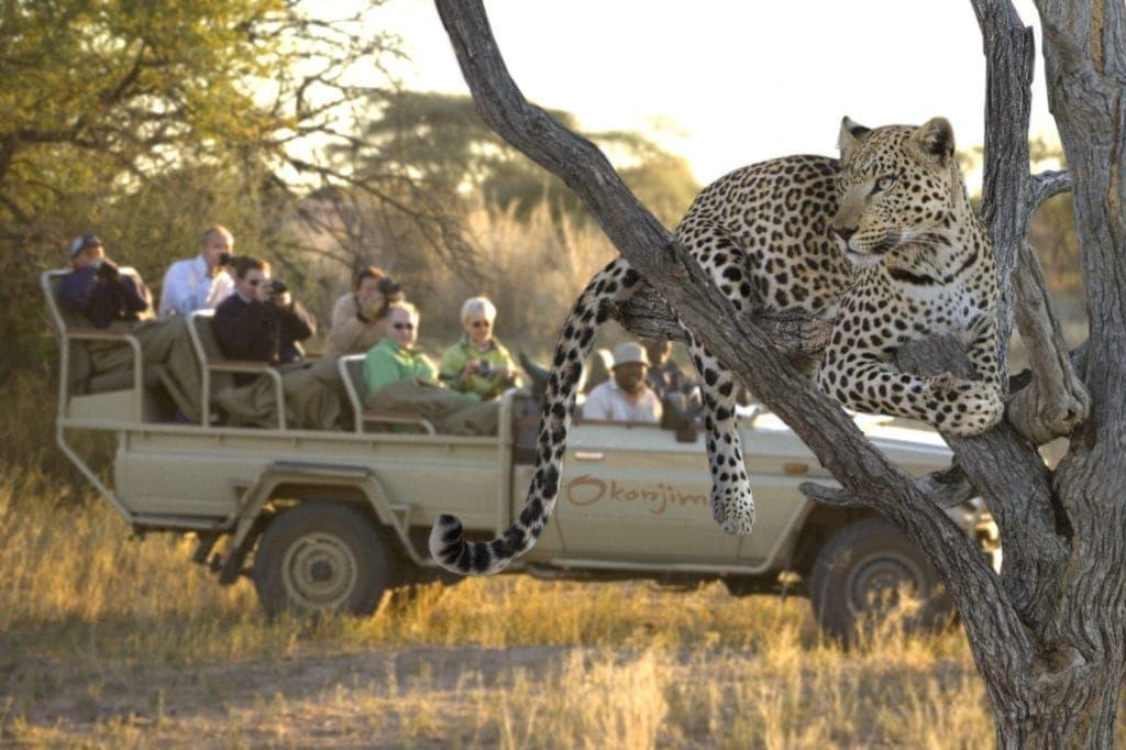Im Okonjima Wildlife Reserve lässt sich die Tierwelt Namibias hautnah erleben.