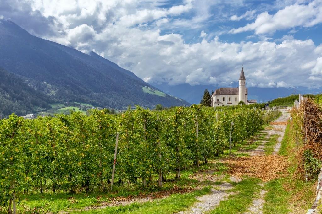 Entlang der Weinberge von Schlankes im Vinschgau.