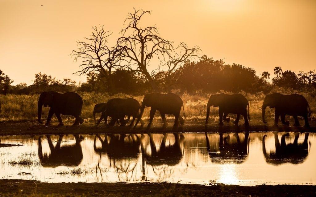 Wilderness Safaris Qurokwe Botswana