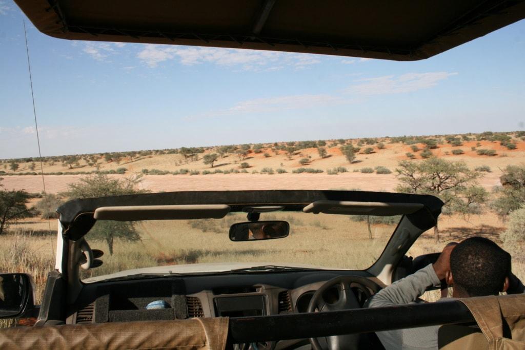 Nach der Regenzeit im April blüht es in der Kalahari in Namibia!