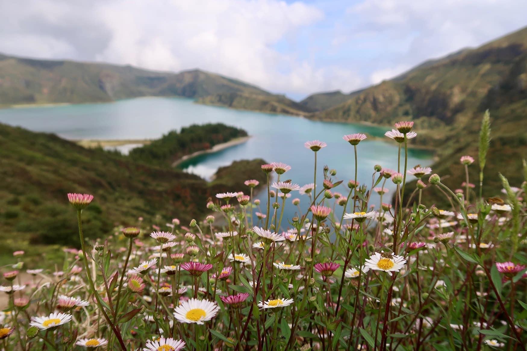 Bunte Blumen vor Vulkankrater auf den Azoren
