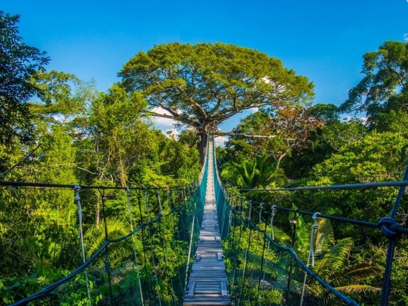 Hängebrücke im Inkaterra Canopy Walkway in Peru