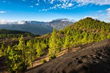 Berge, Wald, La Palma