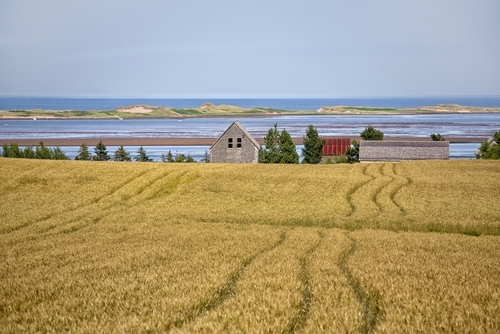 Landschaft in Prince Edward Island