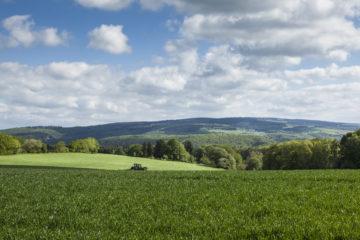 Urlaub im Hunsrück: weite Felder und Wiesen