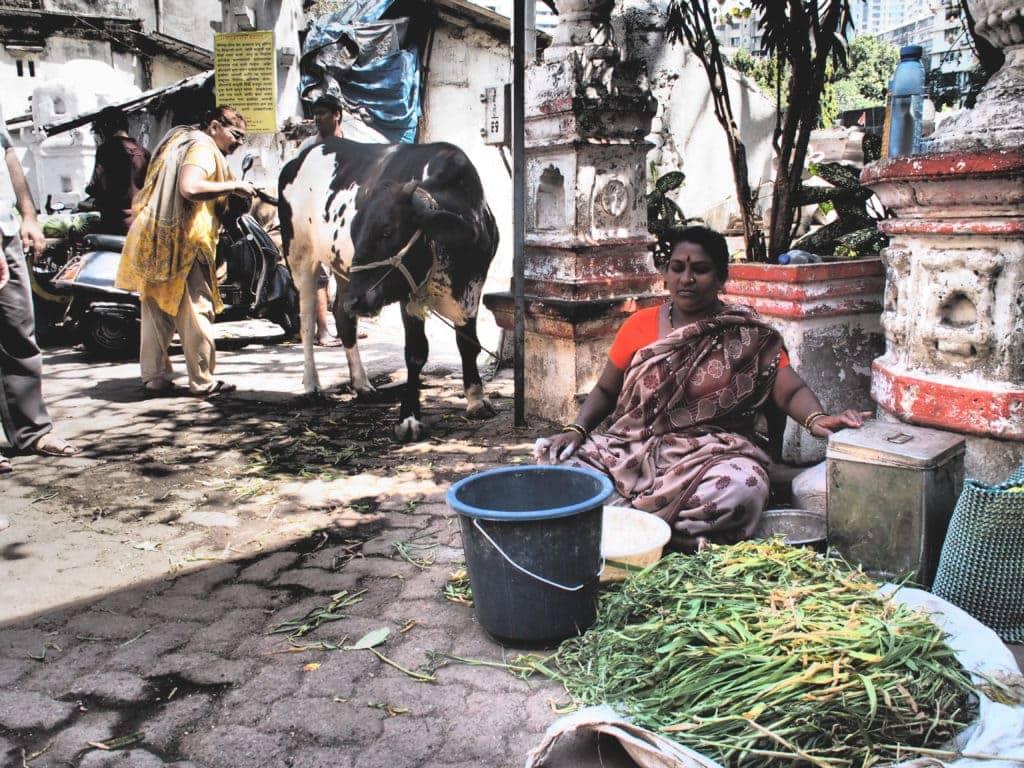 Heilige Kuh in Rajasthan