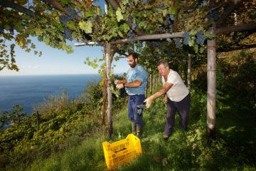 Weinregionen in Europa: Marisa Cumo
