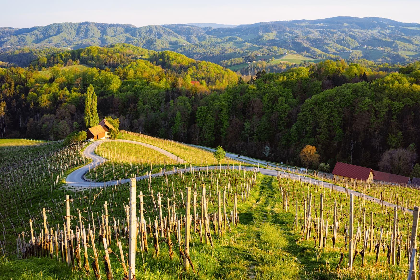 Ein Herz prägt die Weinstraße zwischen den Weinbergen in Slowenien. Malerische Landschaft und Natur in der Nähe von Maribor in Slovenija.