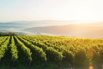 Weinanbaugebiet in Europa
