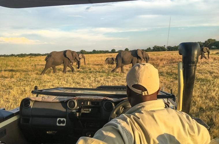 Elefanten während einer Jeep-Safari im Zebras im Okavangodelta in Botswana