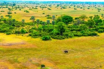 Botswana, Landschaftsaufnahme mit Elefant